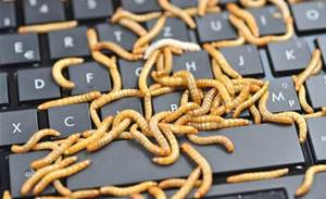 Database destroying worm menaces Linux and Windows servers