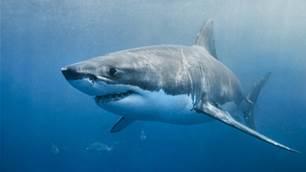 Heavy Vibe in Kingscliff Following Fatal Shark Attack