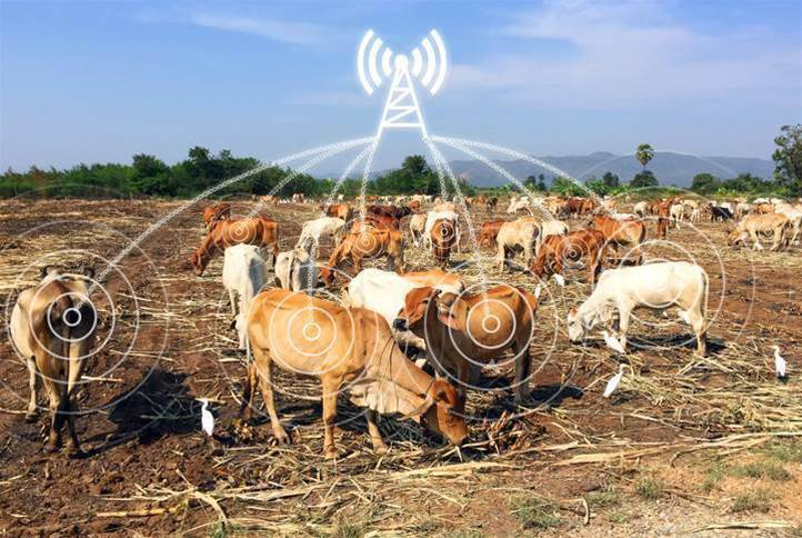 IoT-enabled cows! Will humans follow?