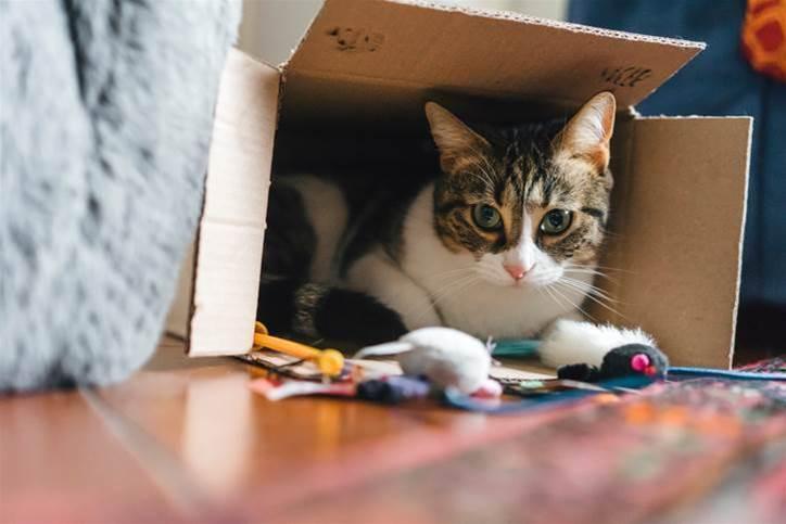Australia's biggest pet and vet network Greencross names new CIO