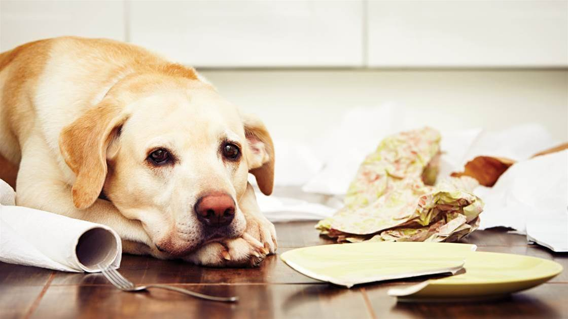 6 Ways To Sooth Pet Separation Anxiety