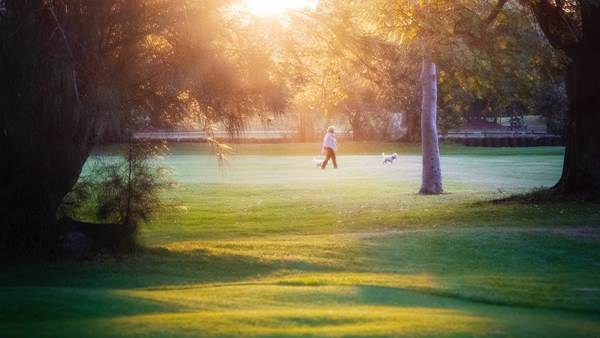 Labor lends support to public golf in Sydney