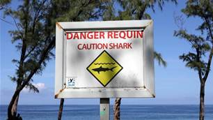 Reunion Island: Shark Attacks, Firing Surf and Fake News