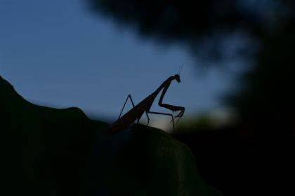 Roaming Mantis malware expands its reach
