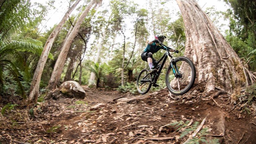 Riding to the edge - understanding logging around Blue Derby trails
