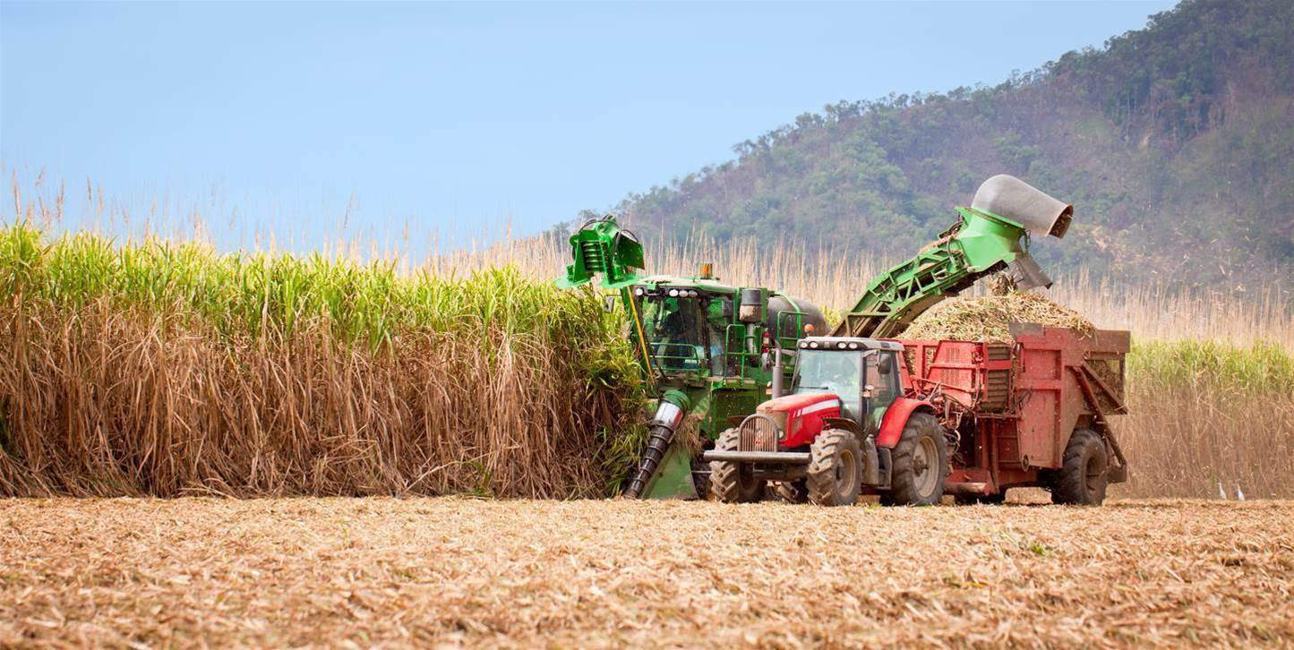 Qld cane farmers to create sugar blockchain