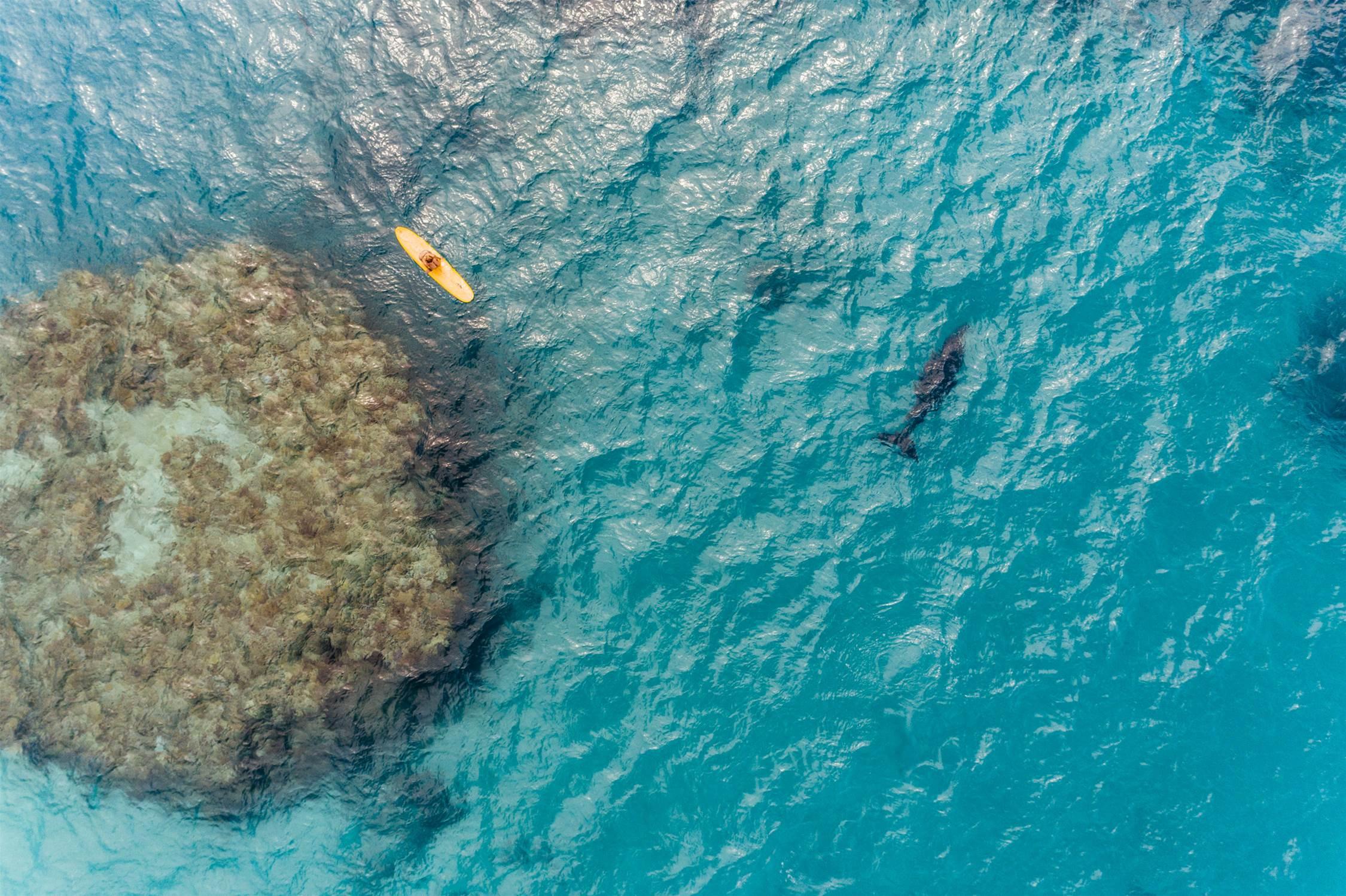 The Reef Beneath