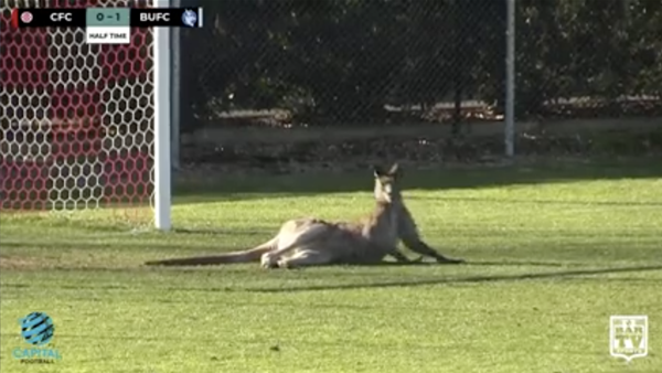 Kangaroo invades pitch in Canberra