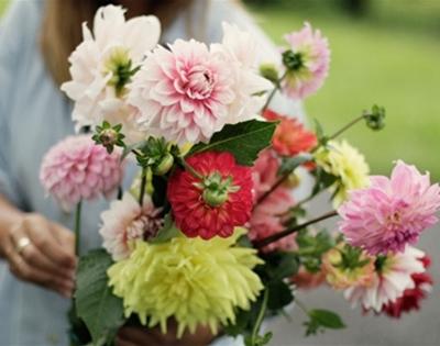 floriade's flowers