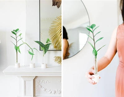 propagation vases