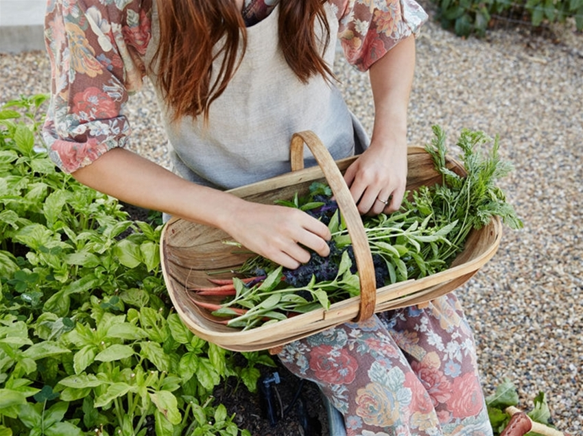 word from the wise: how to grow your own groceries