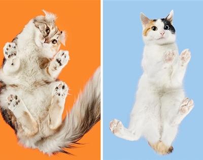feline underbellies