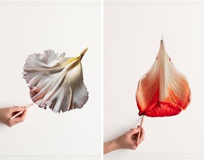 cj hendry's petals