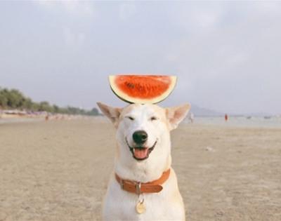 gluta the jolly dog