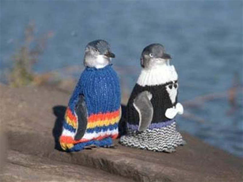 knit a penguin pullover