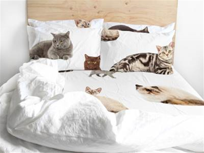 the odd collective bedding