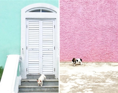 minimal pup