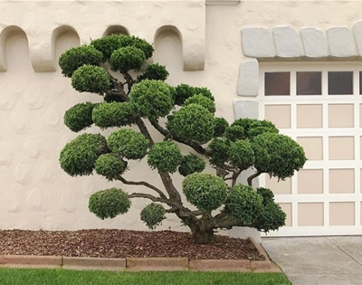 the sculpted trees of san francisco