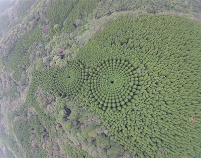 forest circles