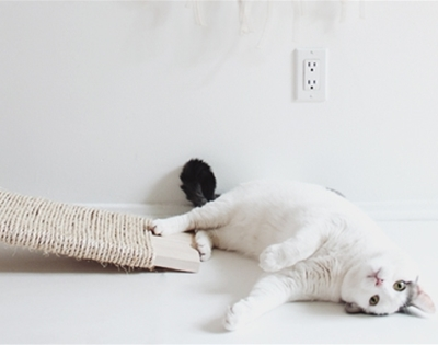 cat scratcher diy