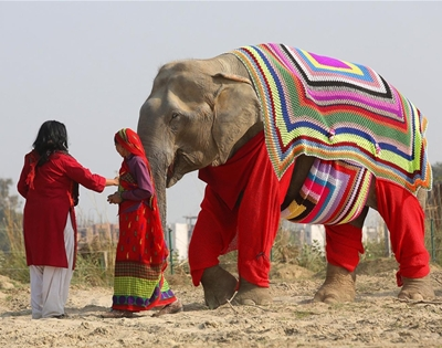 rugged up elephants in india