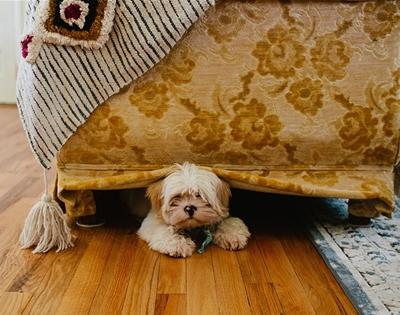 a super-quick guide to interior design for pets