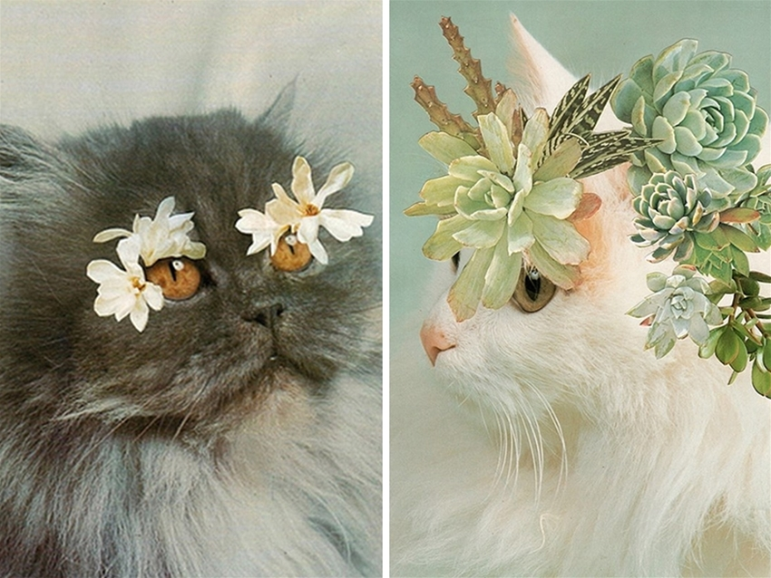 stephen eichhorn's cats and plants
