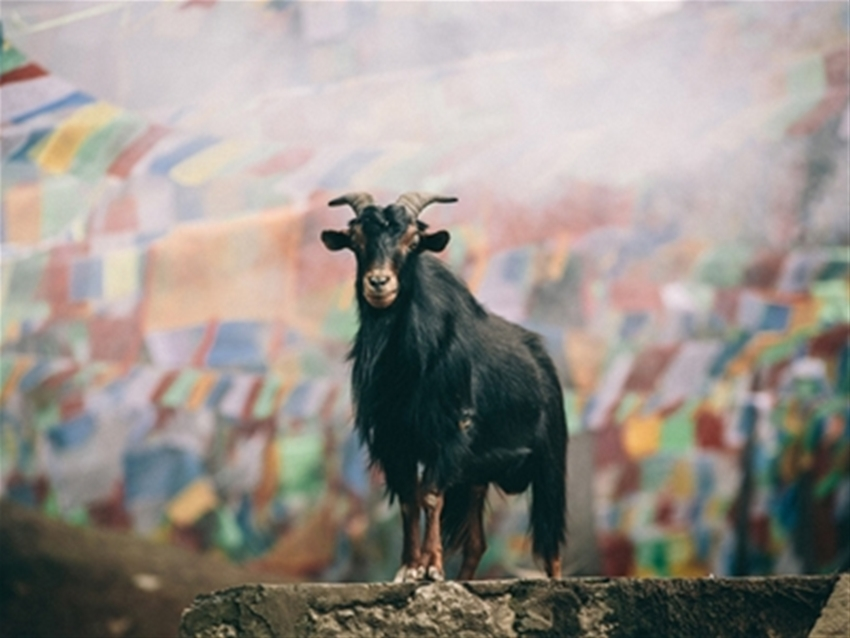 travel interview: tiger leaping gorge