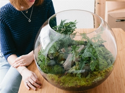plant by packwood terrarium workshop giveaway