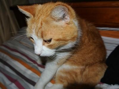 snaps for nikon: kate ringe