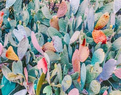 nicholas scarpinato photography