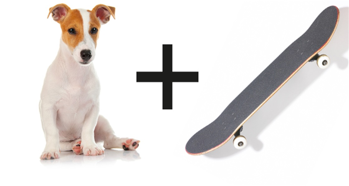 Teach Your Dog to Skateboard!