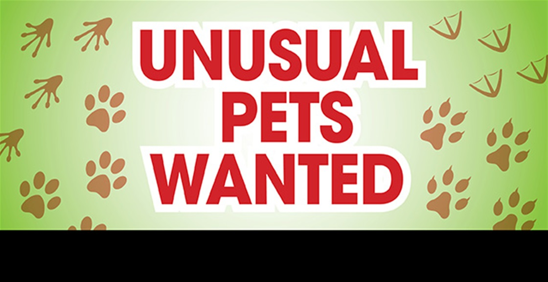DO YOU HAVE AN UNUSUAL PET?