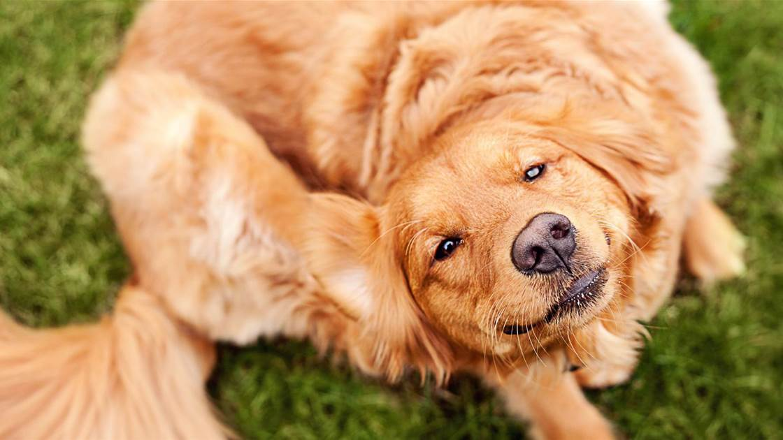 How to Tell If Your Pet Has Seasonal Allergies