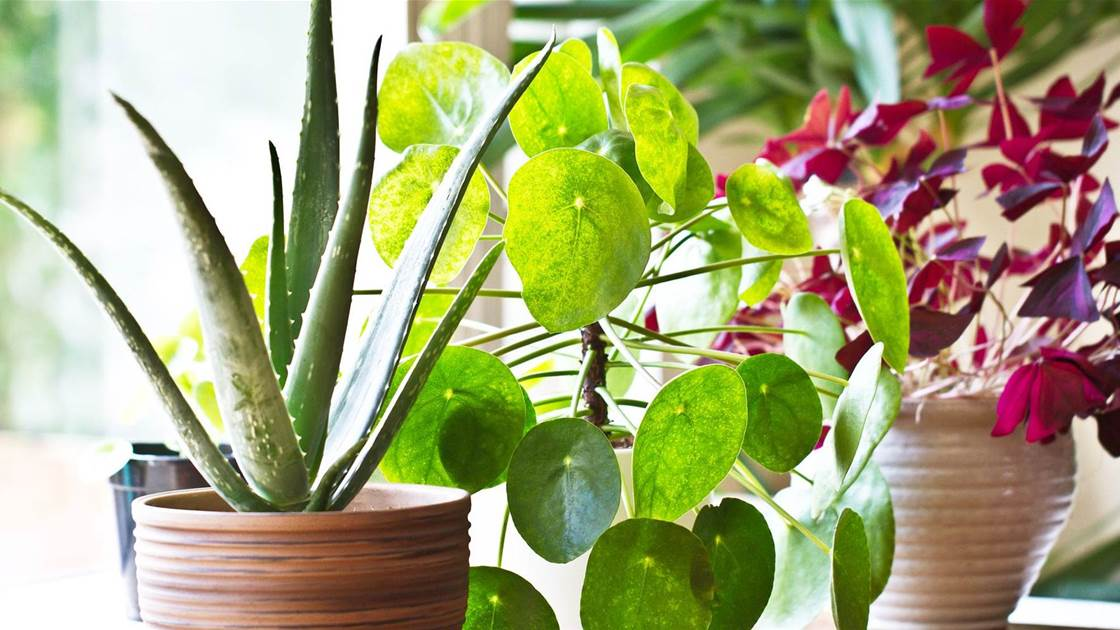 8 Healthy Reasons You Need To Buy Indoor Plants Right Now