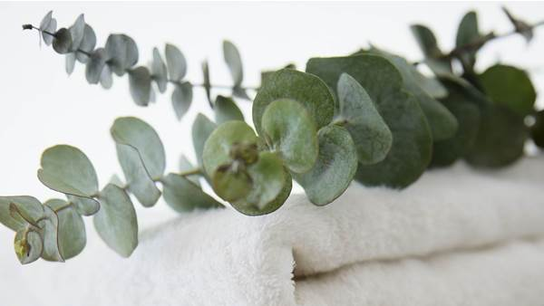 People Are Hanging Eucalyptus in Their Showers to Clear Up Their Stuffy Noses