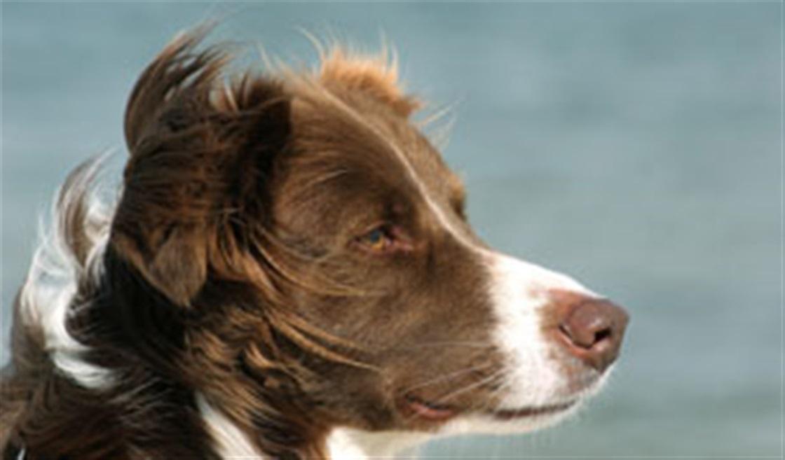 Amazing Dog Wins Talent Show!