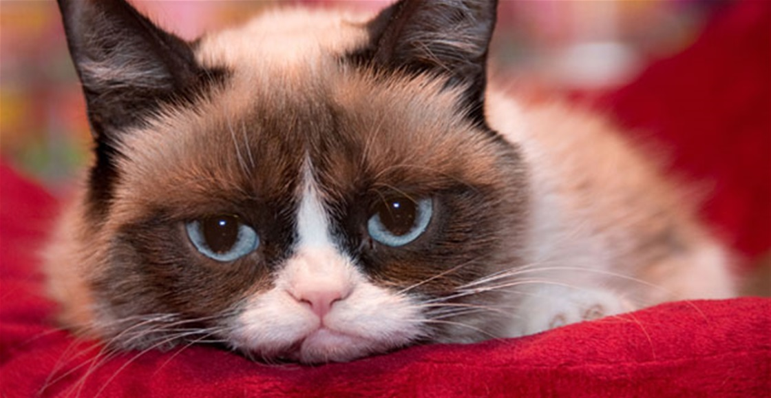 Interview with Grumpy Cat!