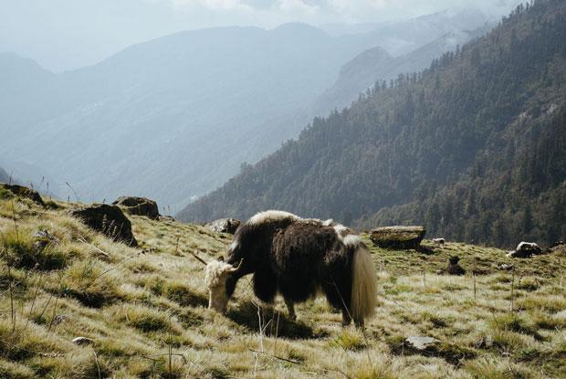 Annapurna blog main