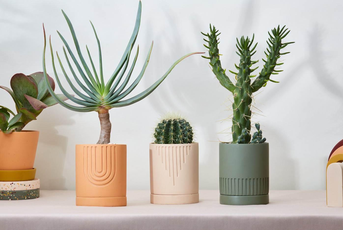capra designs 1