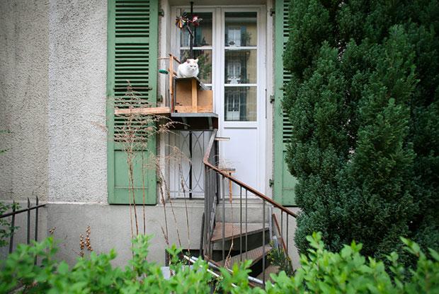 cat ladder 2