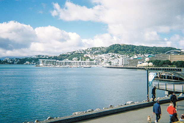 frankie Wellington NZ bay
