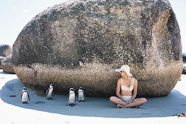 frankie fabrics stocksy penguins