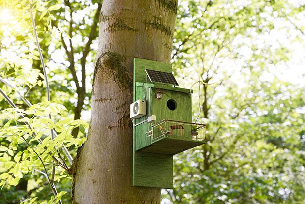 frankie sustainability birdhouse main