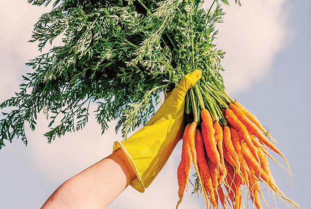 gardening big list