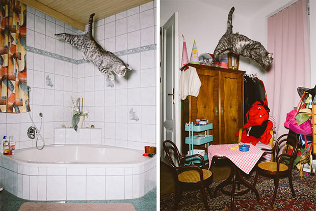jumping cats body 3