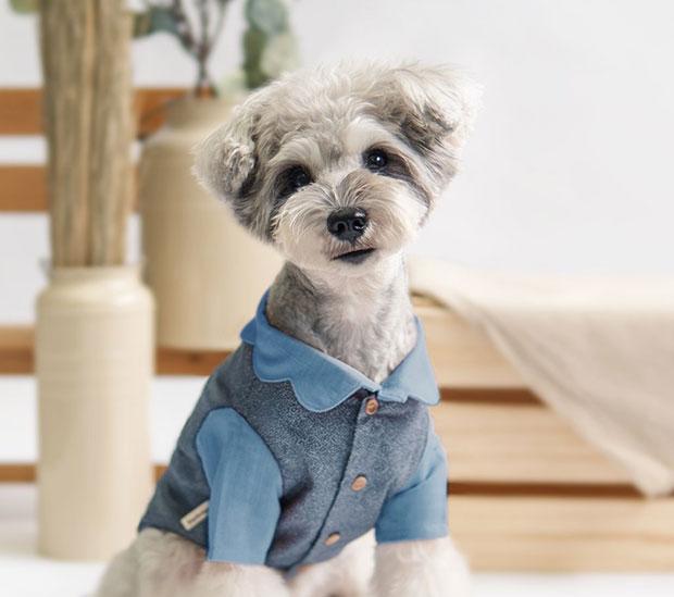 oh pop dog blog 2