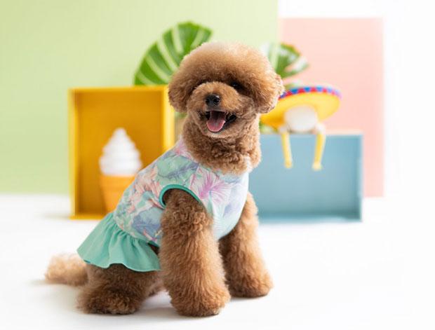 oh pop dog blog 3