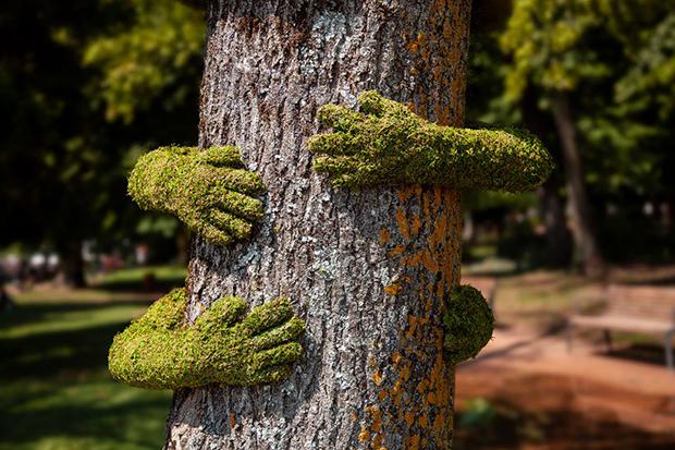 tree hug blog frankie 111