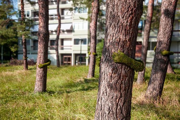 tree hug frankie 2